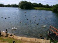 Lake - May 2011