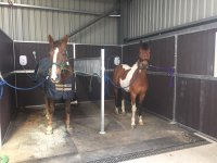 Grooming at Aberdeen Riding Club