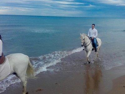 Los Bestias Playa Gandía
