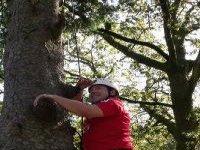Scaling the Tree Climb