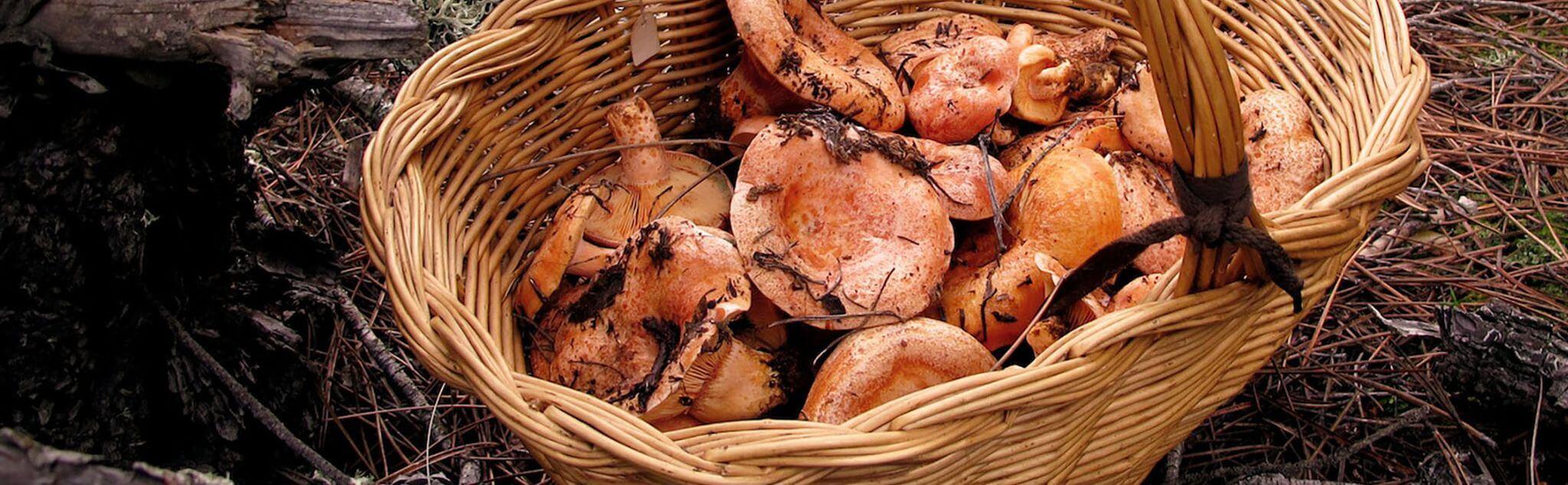 Mushroom Picking in Spain