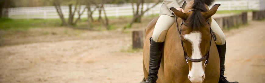 Offers of Horse Riding  Arboces