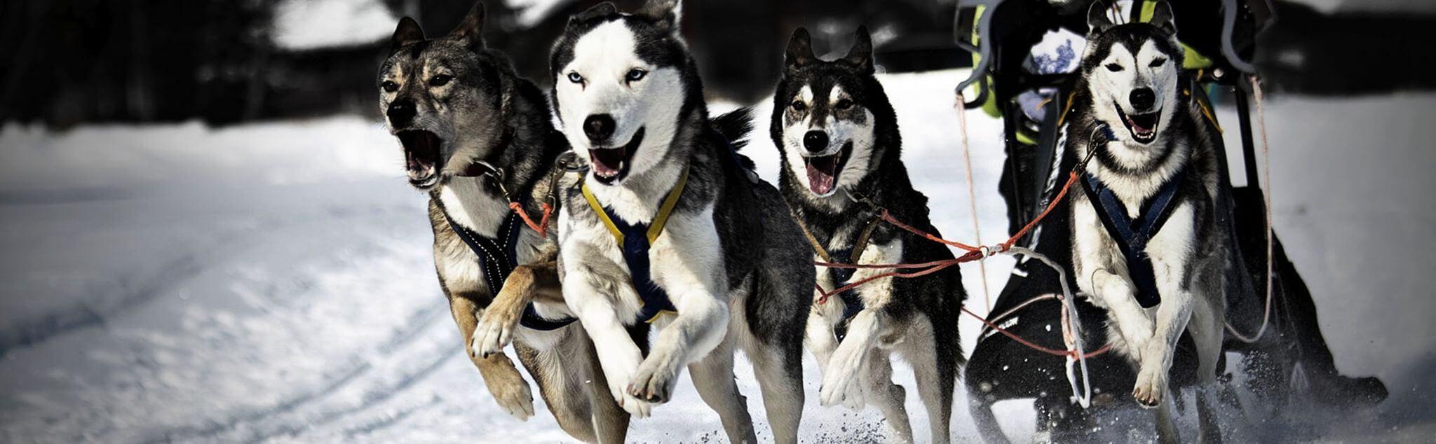 Dog Sledding in Ordino