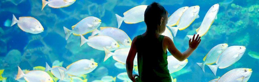 Offers of Aquariums  Spain