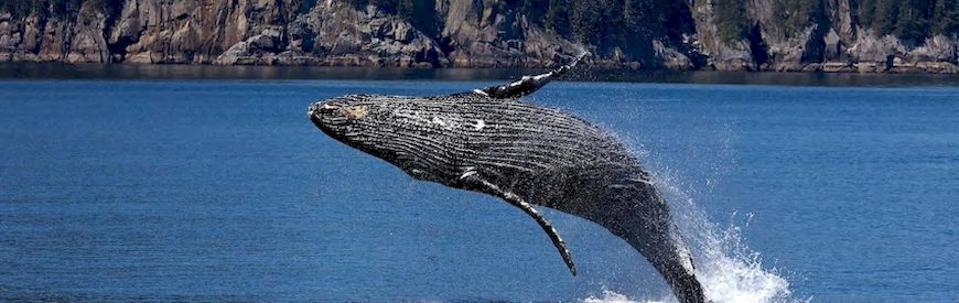 Offers of Whale Watching  Gran Canaria