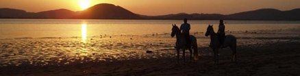 Horse Riding Community