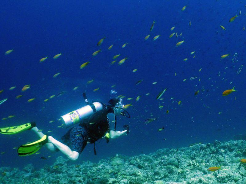 Observer toutes sortes d'animaux marins
