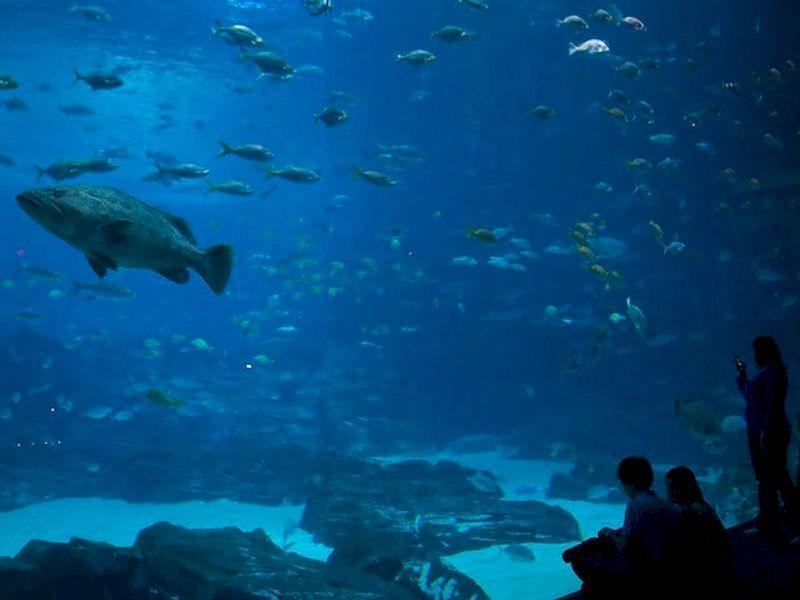Relaxing undersea