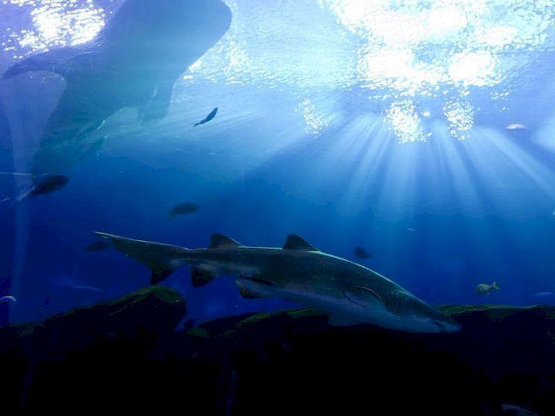 Sleep with sharks