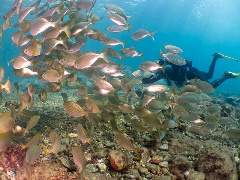 Explore Spain's beaches from the depths