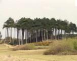 Formby wood